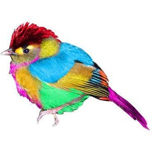 DJ-Birdie